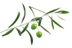 Verse olijven Royalty-vrije Stock Afbeeldingen
