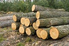 Verse opgestapelde eiken boom stock foto