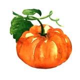Verse oranje pompoen die op witte achtergrond wordt geïsoleerd Royalty-vrije Stock Foto's