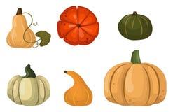 Verse oranje pompoengroente geïsoleerde vectorillustratie Royalty-vrije Stock Fotografie