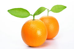 Verse Oranje vruchten Stock Foto