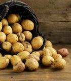 Verse organische aardappels op een houten achtergrond Stock Foto's