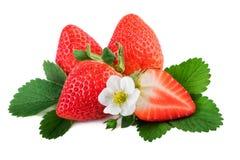 Verse organische aardbei met bladeren en bloem Royalty-vrije Stock Foto's