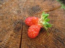 Verse organische aardbeien op een boomstomp Royalty-vrije Stock Afbeeldingen