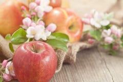 Verse organische appelen Stock Afbeeldingen