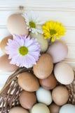 Verse organische chickeneggsoverstroming uit mand met chrysanthe Stock Foto's