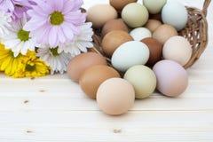 Verse organische chickeneggsoverstroming uit mand met chrysanthe Stock Fotografie