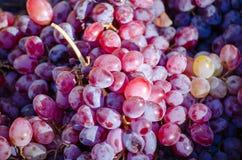 Verse organische druif stock afbeelding