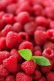 Verse organische frambozen met muntbladeren Fruitachtergrond met exemplaarruimte De zomer en van de bessenoogst concept vegan Stock Afbeelding