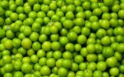 Verse Organische Groene Pruimen Royalty-vrije Stock Fotografie