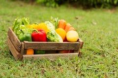 Verse organische groente in houten krat royalty-vrije stock fotografie