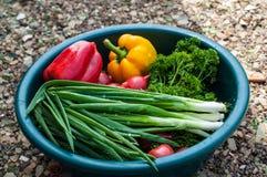 Verse organische groenten Royalty-vrije Stock Afbeelding