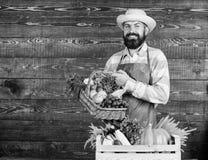 Verse organische groenten in rieten mand en houten doos Mensen vrolijke gebaarde landbouwer dichtbij groenten houten achtergrond stock foto