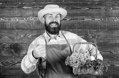 Verse organische groenten in rieten mand Mensen gebaarde landbouwer die de houten achtergrond van ecogroenten voorstellen Landbou royalty-vrije stock foto's