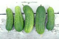 Verse Organische Komkommer Stock Fotografie