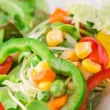 Verse organische plantaardige salade Stock Afbeelding