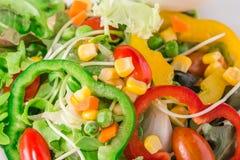 Verse organische plantaardige salade Royalty-vrije Stock Foto