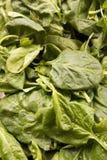 Verse organische spinazie Stock Afbeelding