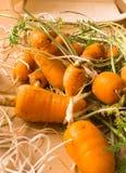 Verse organische wortel Stock Foto's