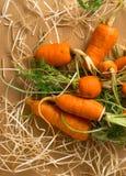 Verse organische wortel Stock Afbeelding