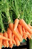 Verse organische wortelen royalty-vrije stock fotografie