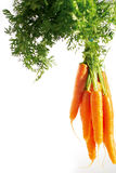 Verse organische wortelen Stock Afbeeldingen
