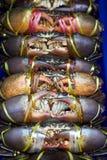 Verse overzeese krab in de verse markt Royalty-vrije Stock Afbeelding