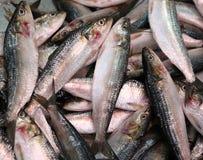 Verse overzeese vissen Royalty-vrije Stock Fotografie