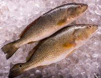 Verse overzeese vissen stock foto's