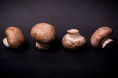 Verse paddestoelen bruine champignon op een zwarte Stock Foto