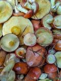 Verse paddestoelen in een mand in het bos royalty-vrije stock fotografie