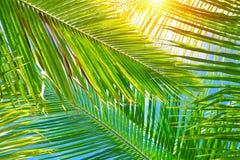 Verse palmbladenachtergrond stock foto's