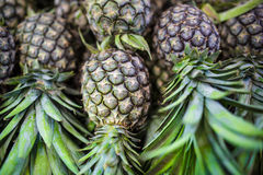 Verse pineaples Royalty-vrije Stock Foto