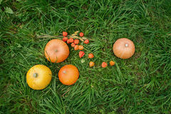 Verse pompoenen en bloemen op het groene gras Royalty-vrije Stock Foto