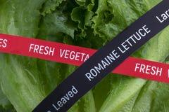 Verse product-groenten vegetables Romaine Lettuce royalty-vrije stock foto's