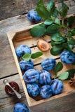 Verse pruimen in houten doos en kruik fruitjam Hoogste mening Stock Afbeeldingen
