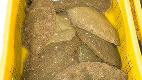 Verse Psettodes-erumei voor verkoop bij Vissenmarkt Royalty-vrije Stock Afbeeldingen