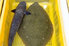 Verse Psettodes-erumei voor verkoop bij Vissenmarkt Royalty-vrije Stock Fotografie