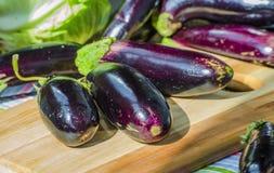 Verse purpere aubergine stock foto
