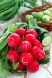 Verse radijs en andere groenten Stock Fotografie