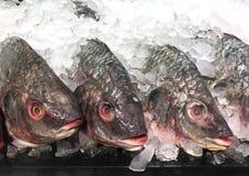Verse Reuzebaarsvissen op ijs in voedselmarkt Royalty-vrije Stock Fotografie