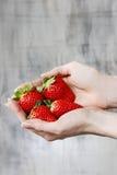 Verse rijpe aardbeien in mooie handen Stock Foto's