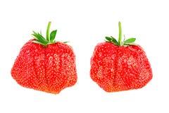Verse rijpe aardbeien op een witte achtergrond Royalty-vrije Stock Fotografie