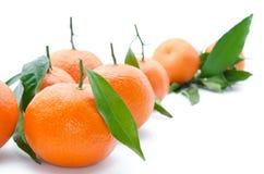 Verse, rijpe citrusvrucht, die op witte achtergrond wordt geïsoleerd Stock Foto
