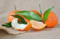 Verse, rijpe citrusvrucht, op het ruwe ontslaan Stock Afbeelding