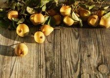Verse rijpe gele en oranje smakelijke en sappige peren, wat op tak met gebladerte op rustieke houten grijze achtergrond met vrije stock foto's
