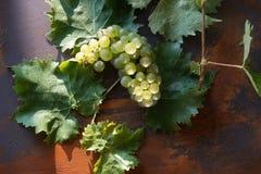 Verse rijpe greent smakelijke sappige druiven stock afbeelding