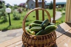 Verse rijpe Komkommers in een mand Royalty-vrije Stock Afbeelding