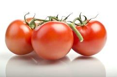 Verse rijpe rode tomaten met bezinning Royalty-vrije Stock Afbeeldingen