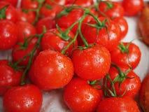 Verse rijpe tomaten Stock Afbeeldingen